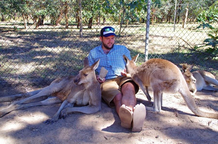 Lone Pine Kangaroos
