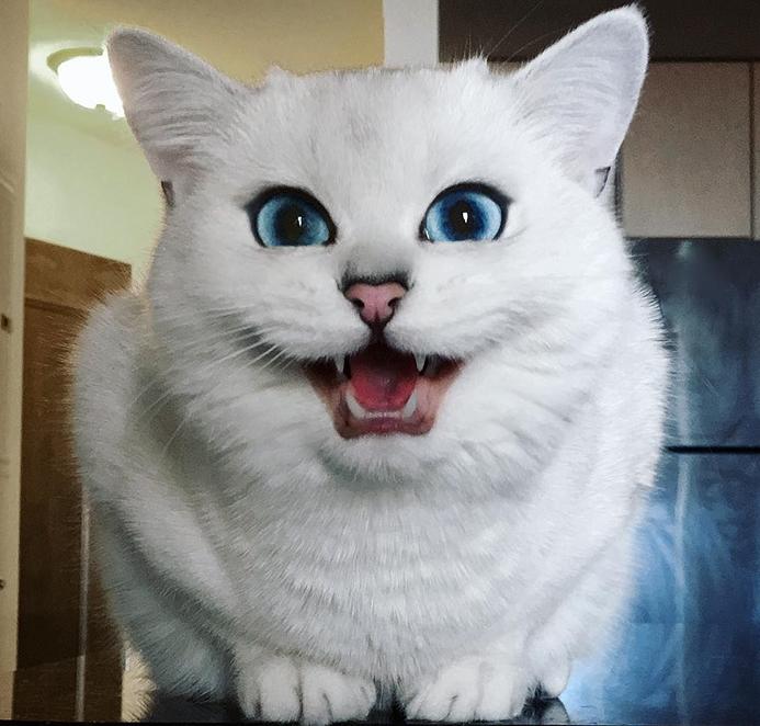 cat microchip feeder
