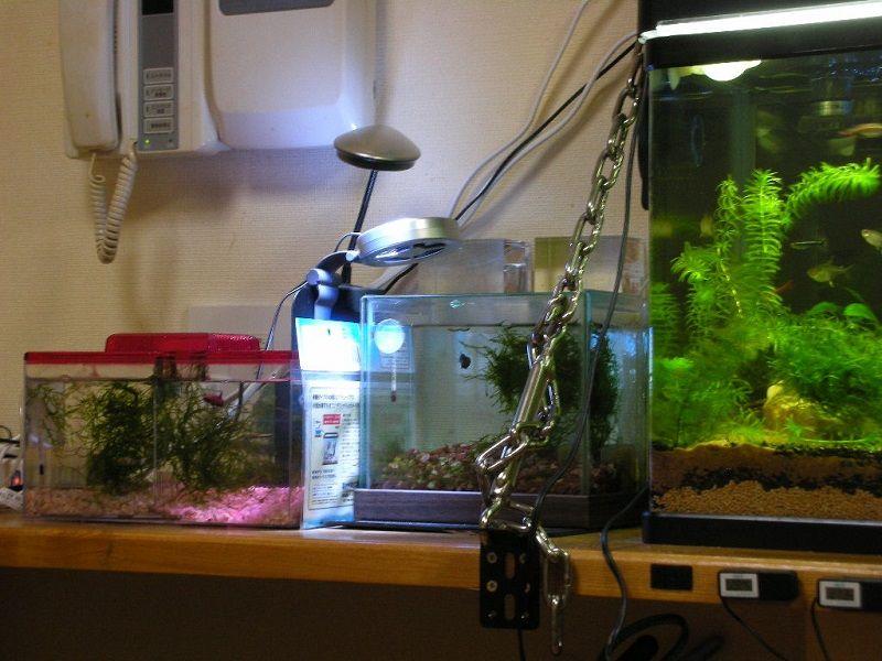 Betta Fish Tank Ideas, Secrets