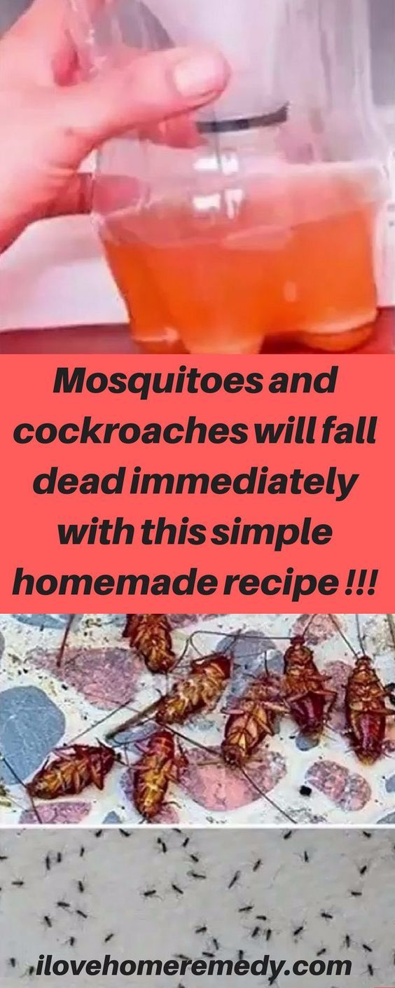 A Powerful Homemade Recipe That Makes All the Mosquitoes and Cockroaches Fall Dead Immediately