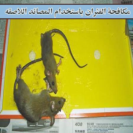 مكافحة الفئران بأستخدام المصائد اللاصقه