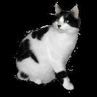 Gato preto e branco png
