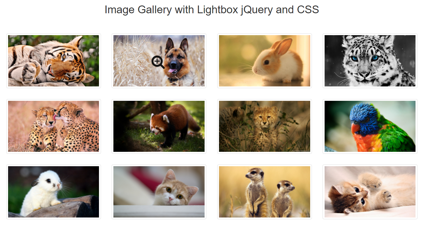 Image Gallery with Magnify Icon using HTML, CSS and jQuery (Lightbox