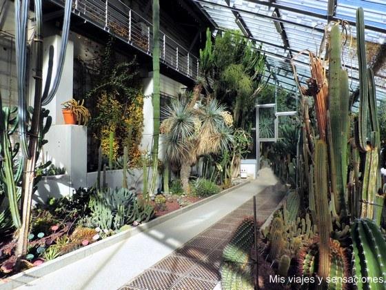 Invernadero Santiago Castroviejo Bolíbar, Real Jardín Botánico de Madrid