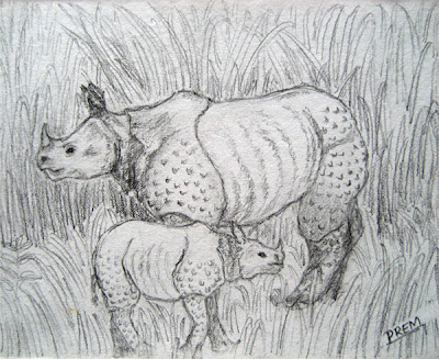 Sketch of Rhinoceros