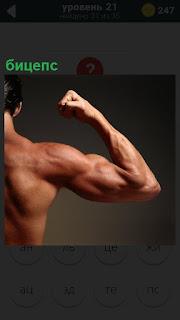 Мужчина согнул руку в плече, показывая бицепс и мускулы напряг
