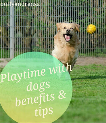 Playtime with dogs benefits and tips