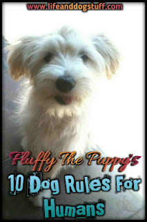 Fluffy The Puppy's 10 Dog Rules For Humans