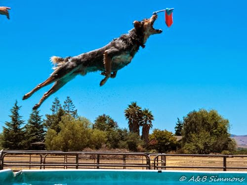 Vader Dock Diving practice in Hollister