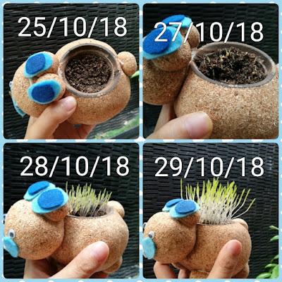 Pertumbuhan tanaman di boneka potty