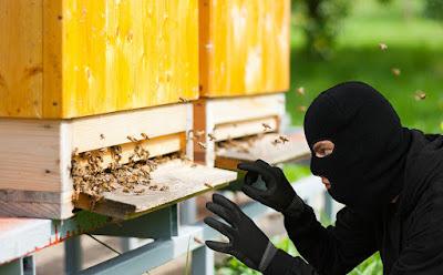Κλοπή μελισσιών στο Σχιστό Κορυδαλλού-όρος Αιγάλεω