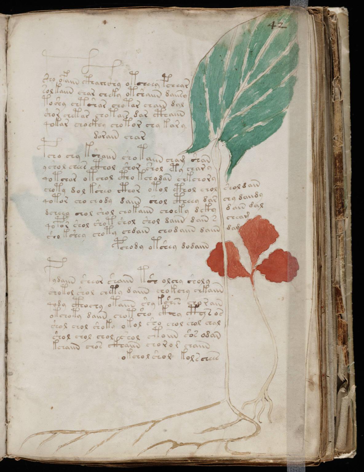 manuscrito081
