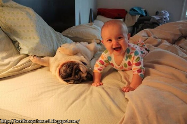 Funny baby and dog