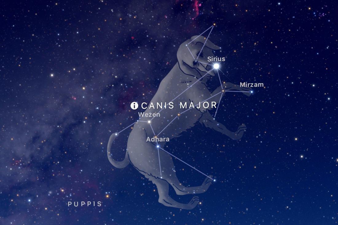 dog star sırıus ile ilgili görsel sonucu
