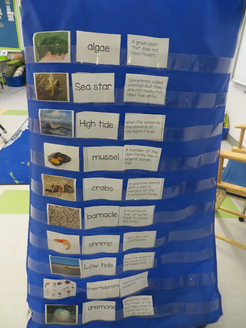 Close reading:  Tide pools. Vocabulary words, definitions, and pictures
