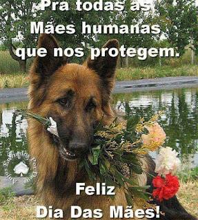 Foto de um cão da raça pastor  com um bouquet composto por três cravos na boca, nas cores: um vermelho e dois brancos, envoltos por ramos campestres. Ao fundo, um lago espelha a paisagem de árvores e arbustos. No topo lê-se: Pra todas as Mães humanas que nos protegem. E no rodapé: Feliz Dia Das Mães!