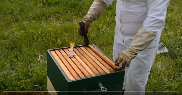 Το ξέστρο του μελισσοκόμου