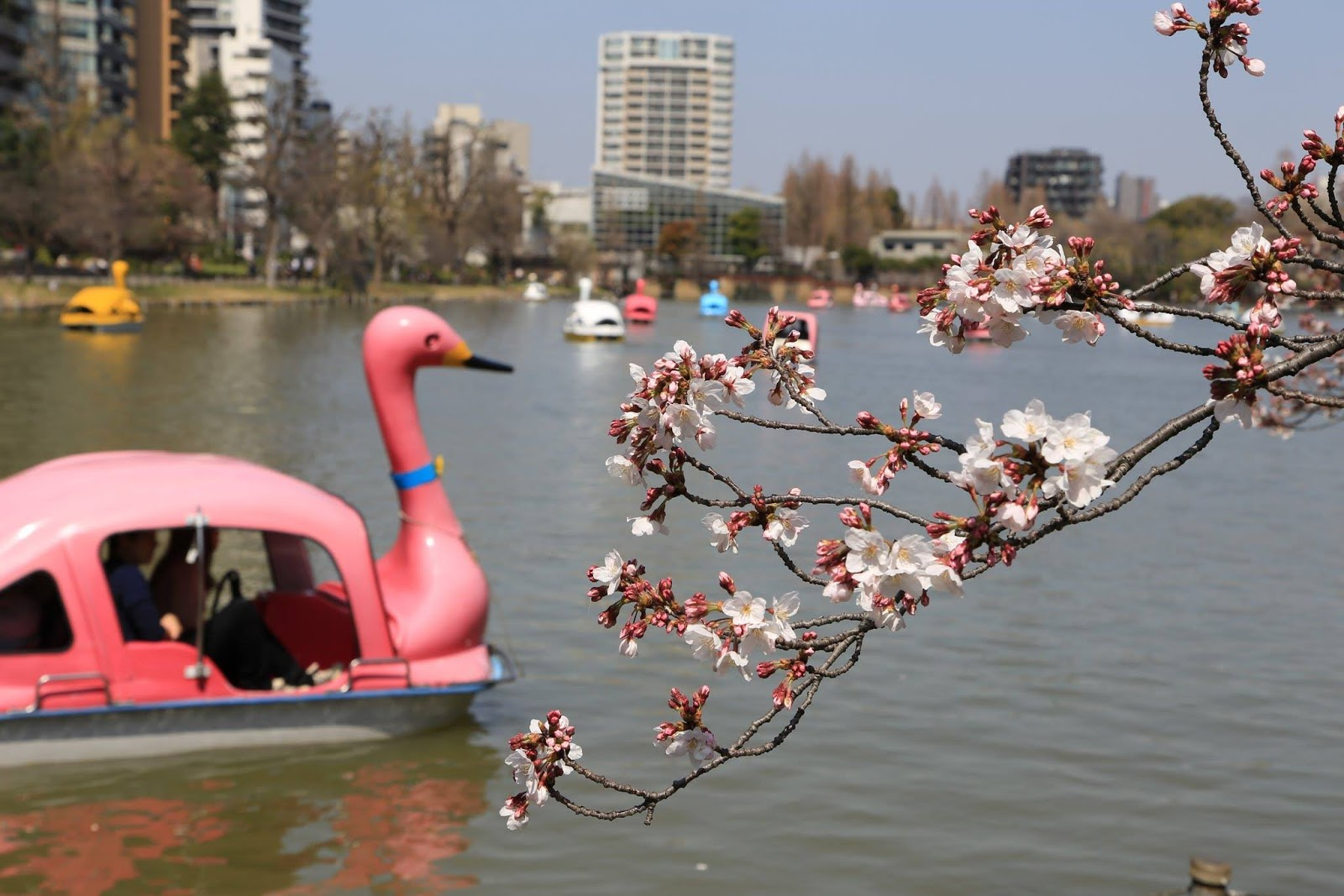 The Holiday And Travel Magazine March 2016 Series Paris Im In Love 200ml If You Are Looking For A Place To View Cherry Blossoms Tokyo This Weekend Then Make Visit Ueno Park Enjoy Atmosphere