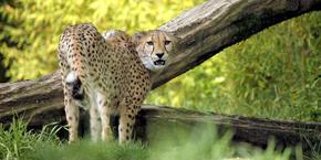 Les meilleurs zoos du monde