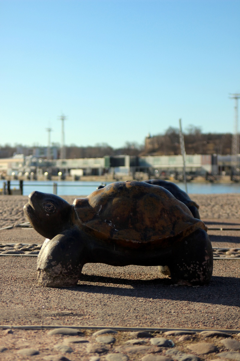 Turtle at the harbor