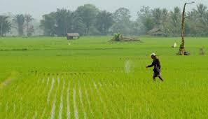 Top Portal Info Forum dan Komunitas Pertanian Indonesia - Agroteknologi.web.id