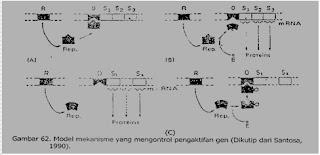 KONTROL GENETIK PROSES METABOLISME TUMBUHAN DAN REGULASI EKSPRESI GEN SERTA PERKEMBANGAN TANAMAN