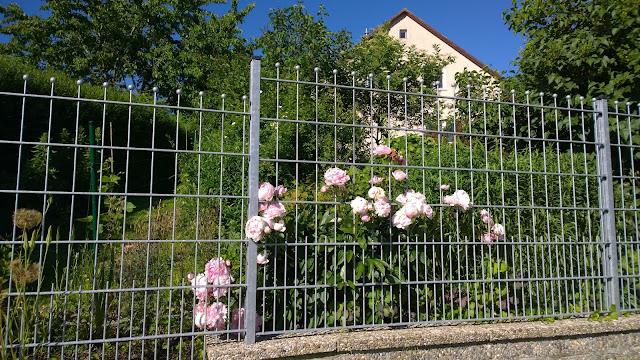 Zaunbeet gut eingewachsen im Sommer (c) by Joachim Wenk