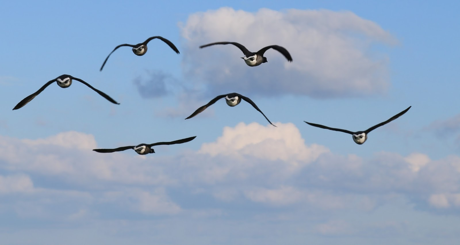 Picture of migrating birds.