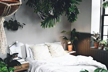 Contoh Desain Kamar Tidur Urban Jungle