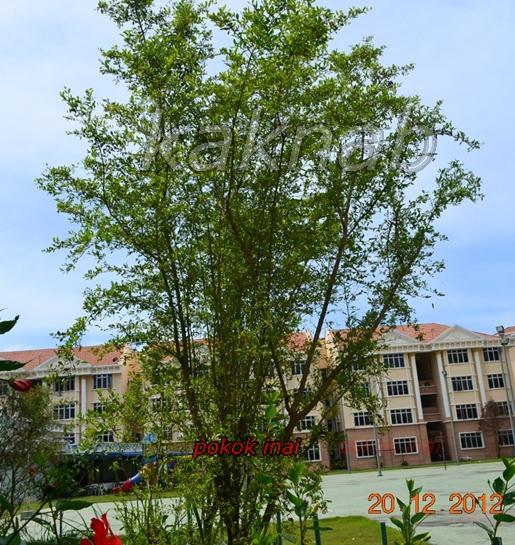 pokok herbabunga ulaman dan segala jenis tumbuhan pokok