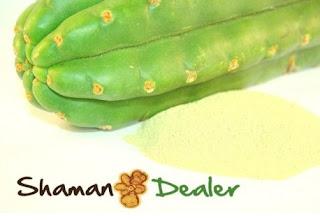 https://www.shamandealer.com/en/home/70-san-pedro-trichocereus-pachanoi-powder.html