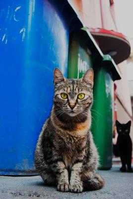 http://danburlacu.tumblr.com/post/147056170763/curious-cat-bucharest