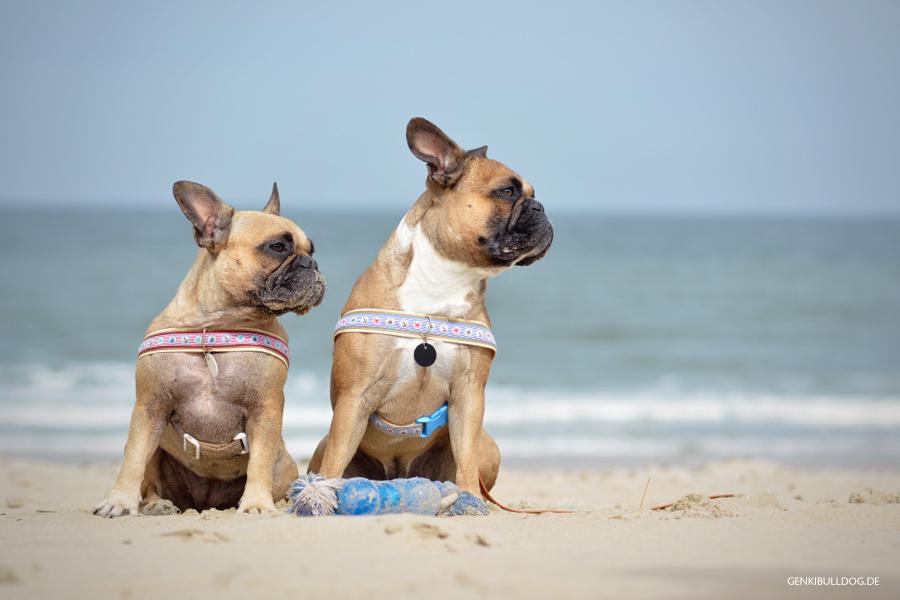 HUNDEBLOG GENKI BULLDOG : Hundeparadis Texel mit unverträglichem ...