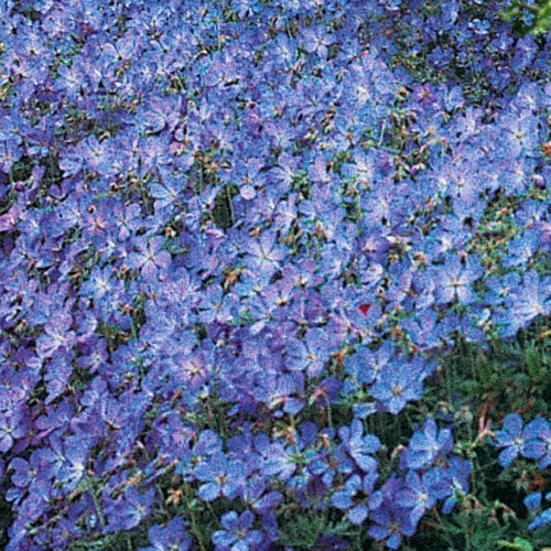 Flower Bed Maintenance Cost: Bees And Apples: First Shade Perennial Flower Garden