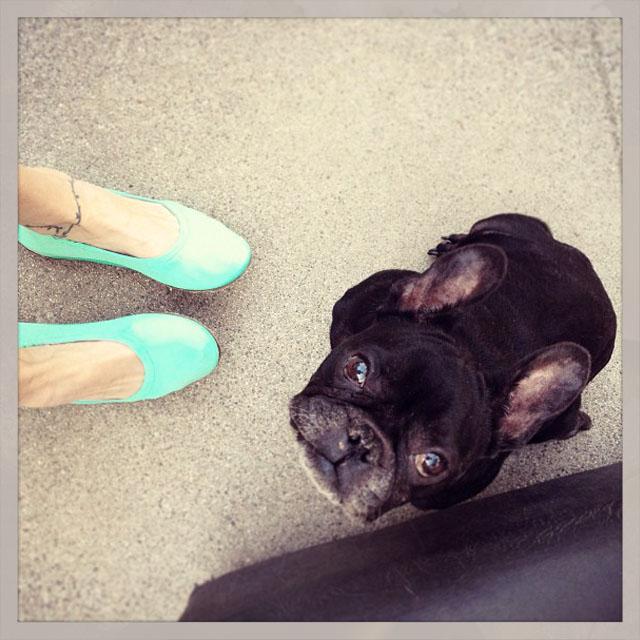 cute bright slip ons, LeRoy the french bulldog