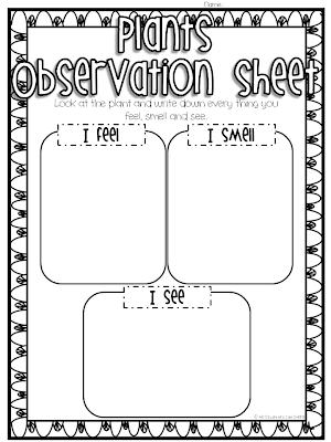 Classroom Freebies Too: Plant Observations