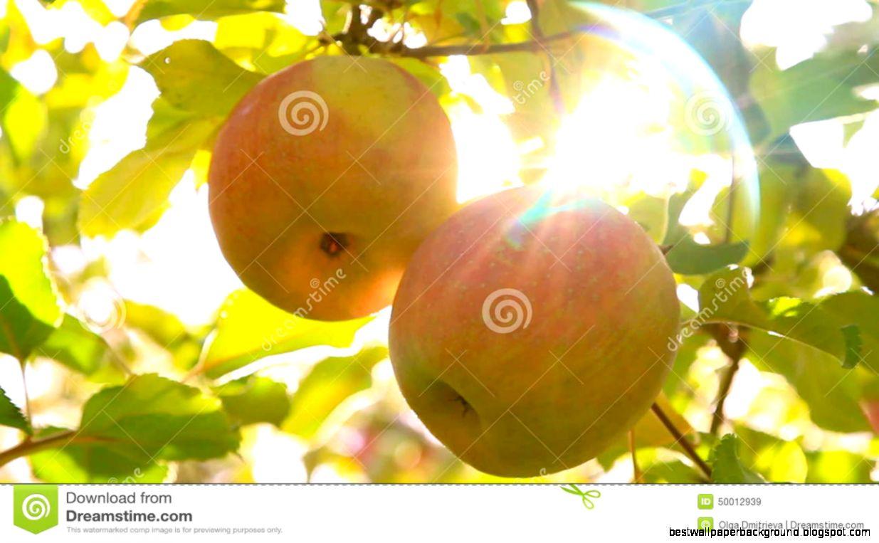 Apple Sun | Best Wallpaper Background
