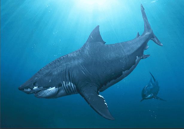 Megalodon ainda existe? Aparições e fatos do tubarão pré-histórico