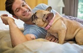 cães e fisioteraía