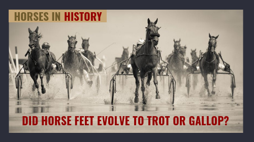 paleobiology research on horse toe and gait