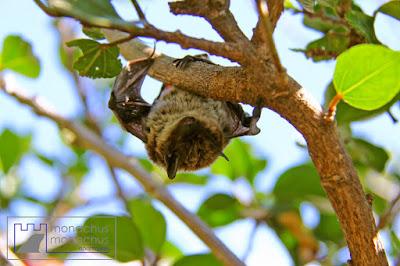 Drying bat