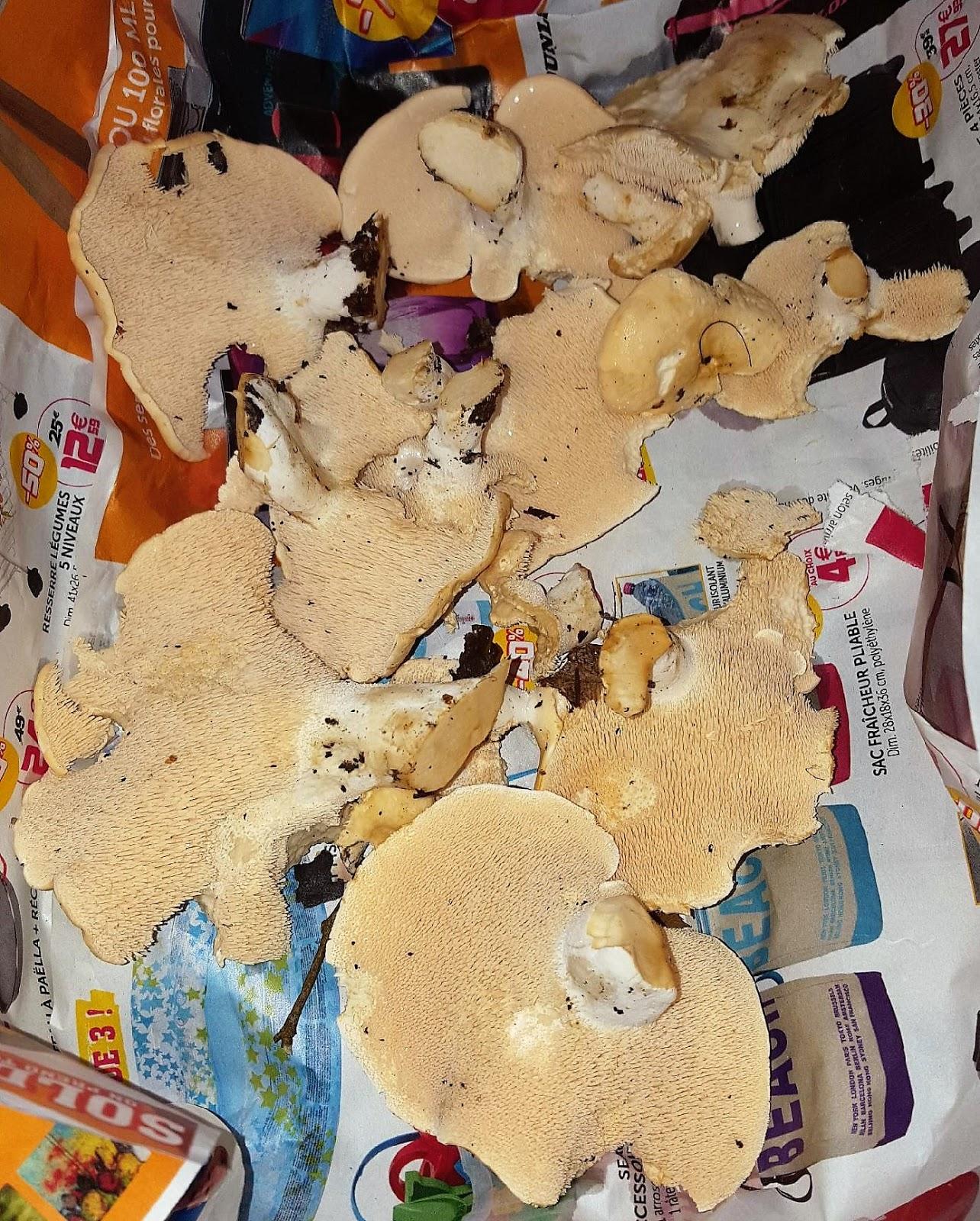 Fricassee de pieds de mouton - Cuisiner les champignons pieds de mouton ...