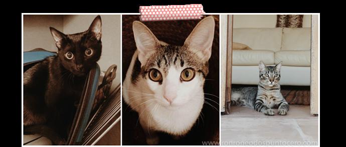 Una vida con tres gatos