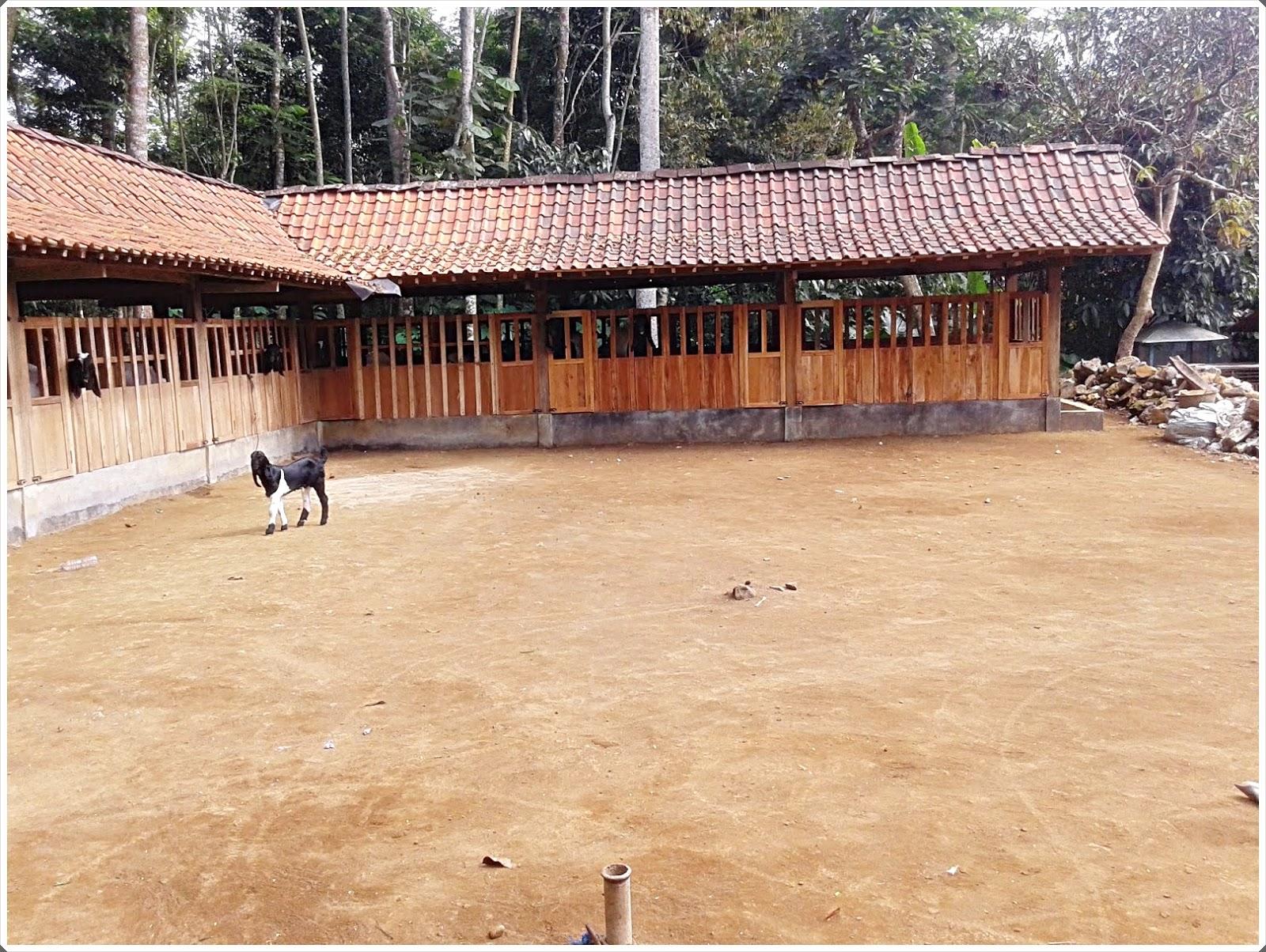 gambar 3 kandang kambing etawa