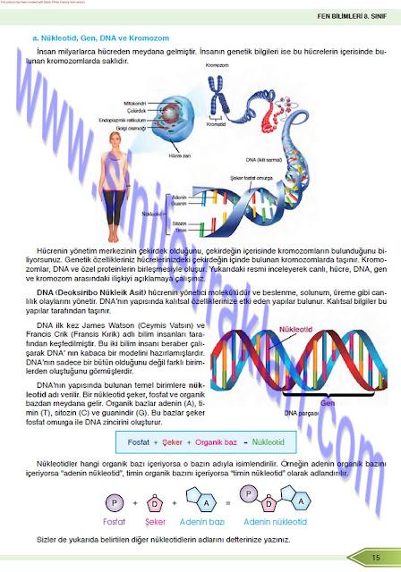 8. Sınıf Fen Bilimleri Öğün Yayınları Ders Kitabı Cevapları Sayfa 15