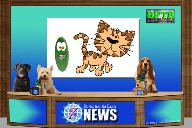 BFTB NETWoof News story of cucumbers and cats