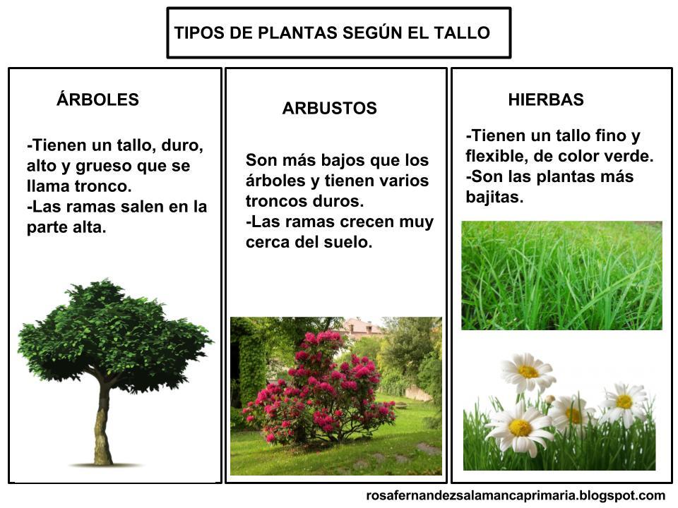 Maestra de primaria las plantas partes de las plantas for Arbustos de hoja caduca