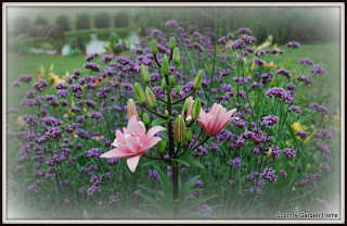 Verbena bonariensis and Asiatic lily
