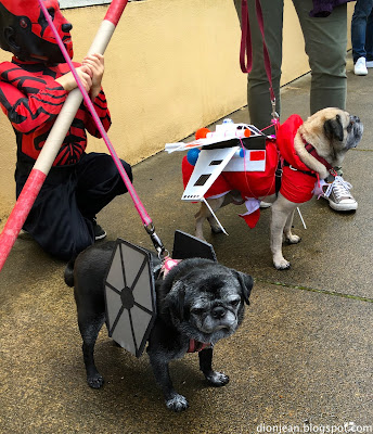 Pugs dressed like Star Wars ships