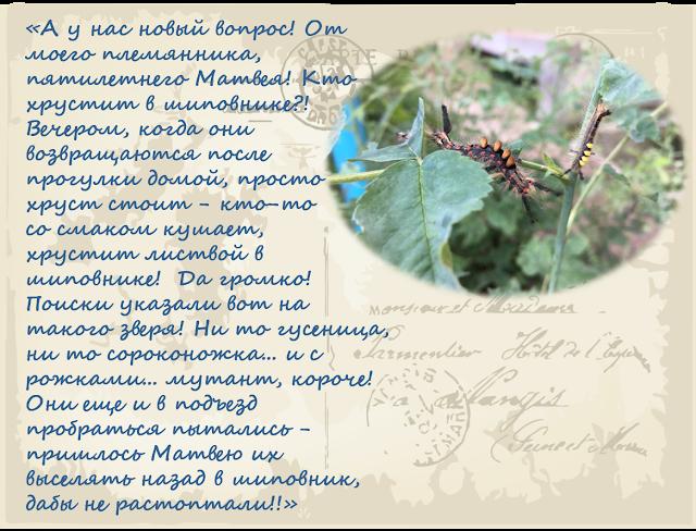 zachem-gusenicam-voloski-magija-biologii